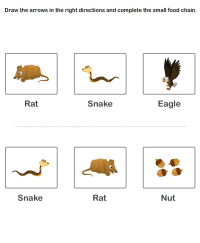 Free Educational Worksheets | Worksheets on Food Chain