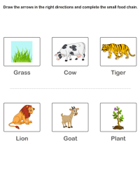 Food Chain Worksheets For Kids