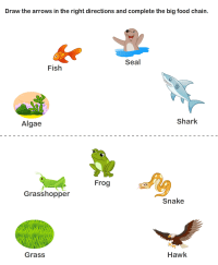Online Food Chain Worksheets | Worksheet To Learn | Kids ...