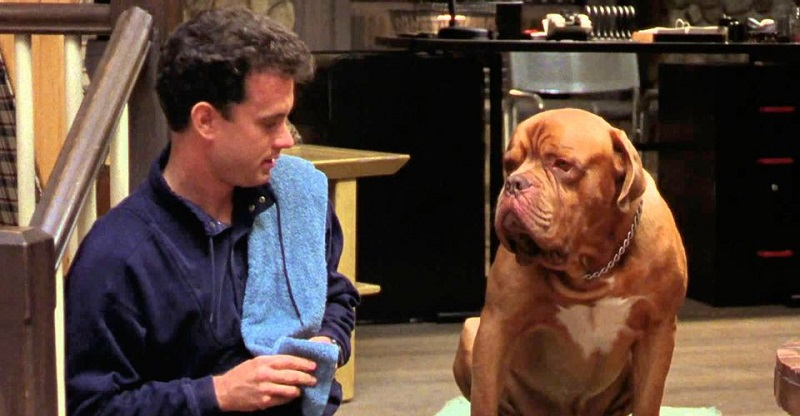 Disney's Turner and Hooch reboot grabs McG to direct the pilot episode 3