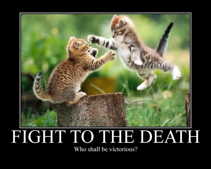 FightToTheDeathcat