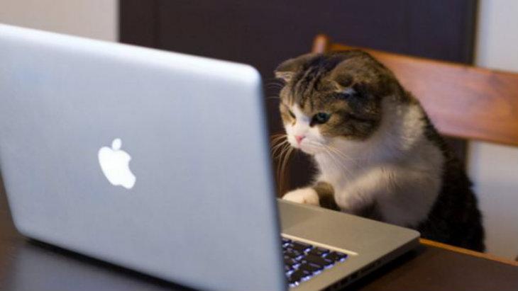 Viewer cat