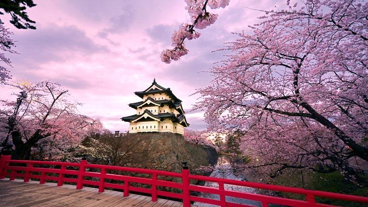 ????? (Hirosaki Castle and cherry blossoms)
