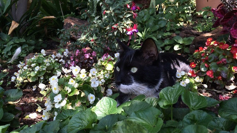 My kitty Lupin... AWWWWWWWW look at him all relaxed with nature and stuff