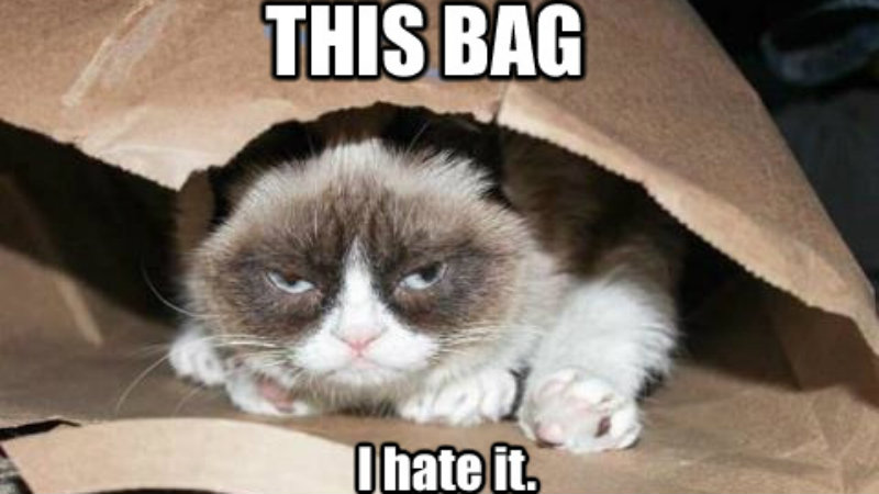 Grumpy cat out of the bag