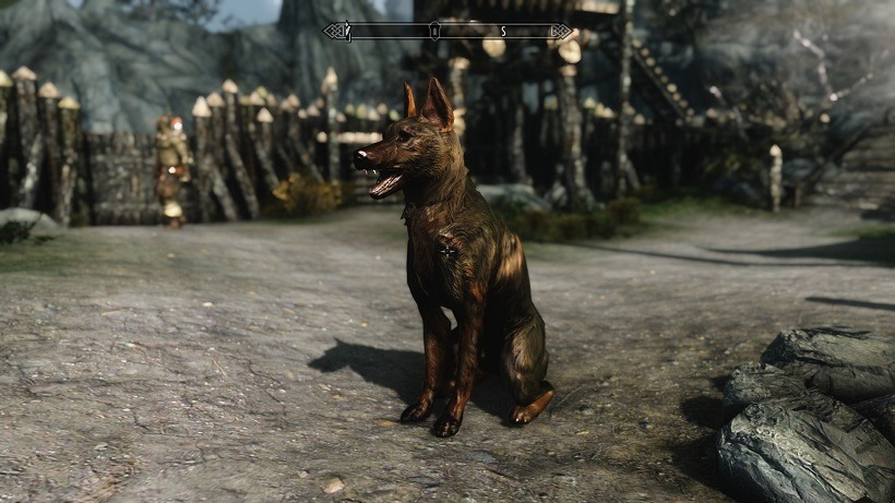 One mission to adopt a dog in Skyrim