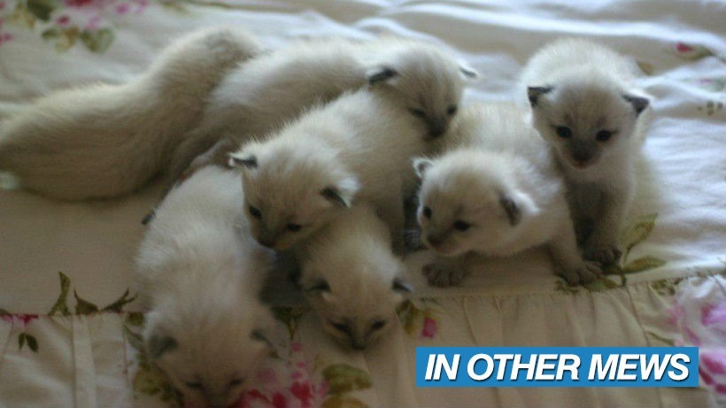 7 kitties