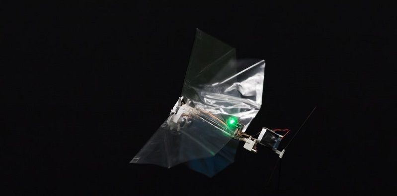 Scientists create a small robot that flies like an insect called the DelFly Nimble 2