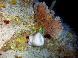 estudio-arrecifes-mesofoticos-13