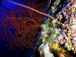 estudio-arrecifes-mesofoticos-15