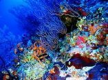 estudio-arrecifes-mesofoticos-2