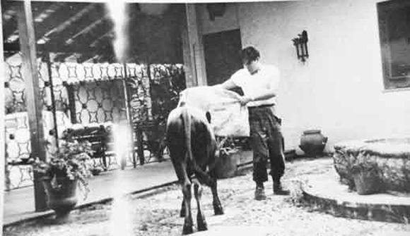"""El Che toreando ante un noble torete en """"casa del americano"""" en San Andrés, Pinar del Río."""