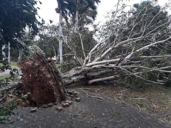 Árbol caido en el centro de Salud La Pradera. Foto: Dorian Arnaldo Justiniani Fernández