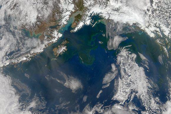 """Una imagen satelital que muestra la costa de Alaska en 2014. Una porción inusual de agua caliente provocó que proliferara un fitoplancton conocido como """"la mancha"""". Foto: NASA."""