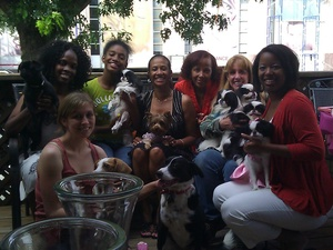The 9 best places in Dallas to spoil your pets  CultureMap Dallas