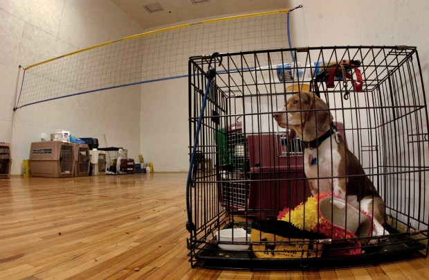 How To Crate Train A Puppy Or Dog A StepByStep Guide - Dog escapes from kennel to comfort abandoned crying puppies