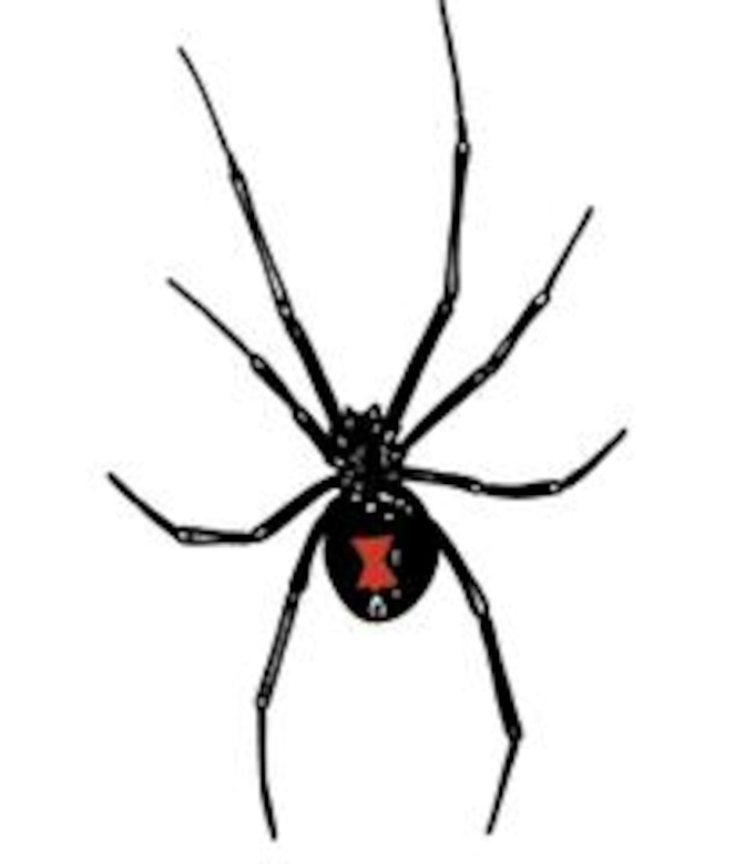 Black widow spiders > Mountain Home Air Force Base