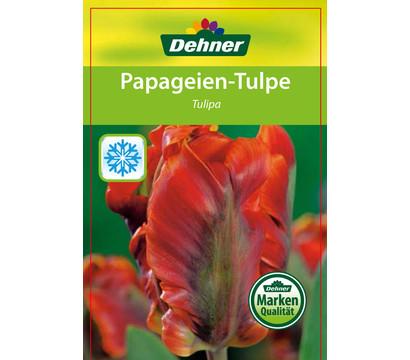PapageienTulpe  Dehner Garten Center