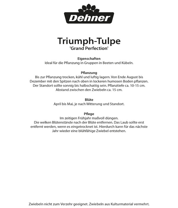 Dehner Blumenzwiebel TriumphTulpe Grand Perfection  Dehner