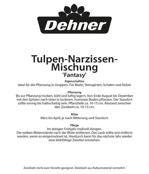 Dehner Blumenzwiebel TulpenNarzissenMischung Fantasy  Dehner
