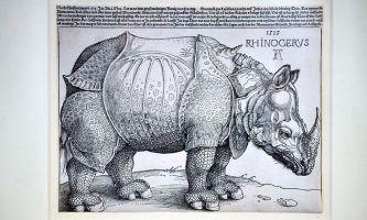35 Dürer Rhinozeros Vorlage   Besten Bilder von ausmalbilder