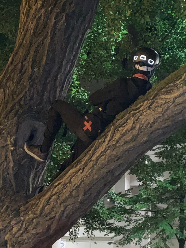 An EMT has climbed into a tree in the park across from the federal courthouse, and is reclining on a branch.