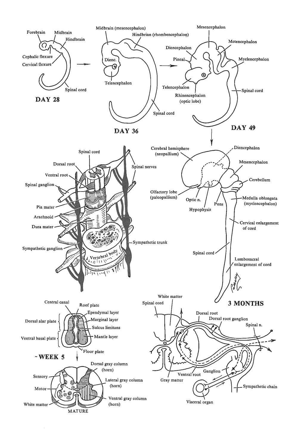 Chapter 140. General Considerations Related to The Anatomy