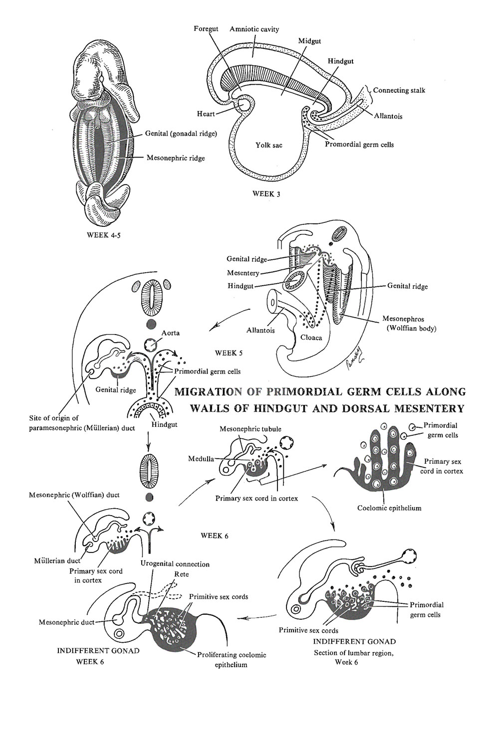 Chapter 98. The Genital or Reproductive System: The