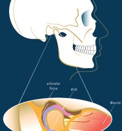 skull bone diagram temporomandibular joint [ 952 x 1434 Pixel ]