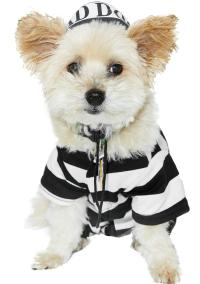 Prisoner Dog Costume
