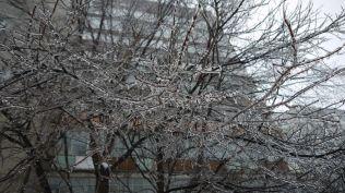 freeezing rain in Bucuresti polei in bucuresti iarna zapada viscol cod portocaliu (144)