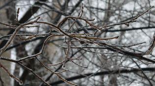 freeezing rain in Bucuresti polei in bucuresti iarna zapada viscol cod portocaliu (74)