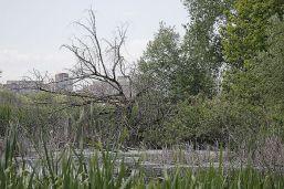delta bucuresti - lacul vacaresti (337)