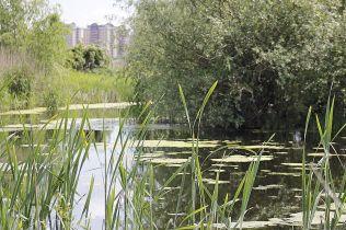 delta bucuresti - lacul vacaresti (448)