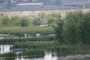 delta bucuresti - lacul vacaresti (568)