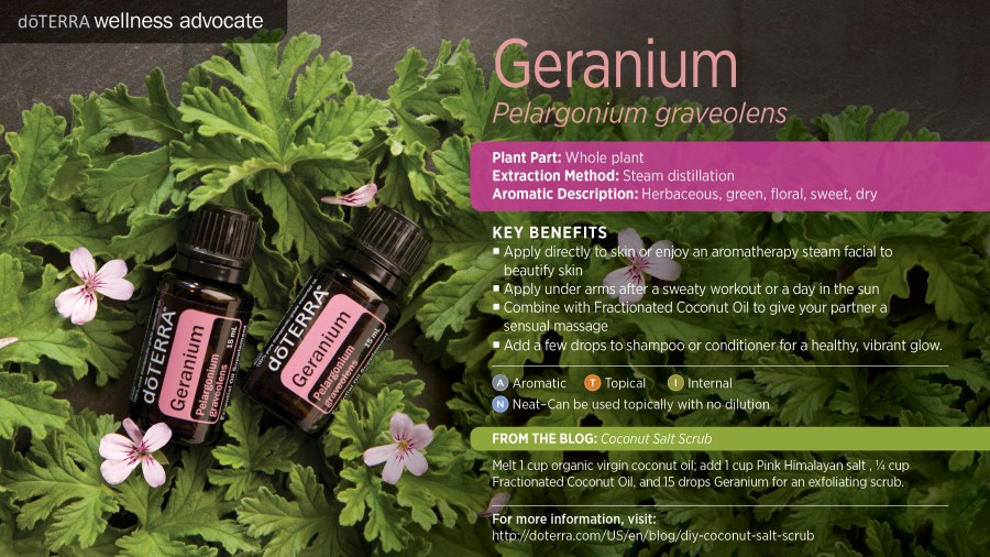 Bilderesultat for geranium essential oil