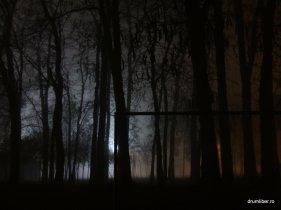 Timișoara în ceață 1