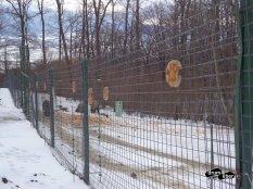 Numele urșilor și data eliberării lor