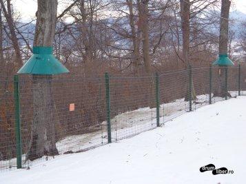 Nu avem voie în copacii de lângă gard