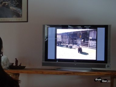 Filmul documentar despre Libearty Bear Sanctuary