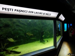 Pești pașnici