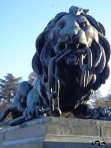Leul a rupt lanțul robiei
