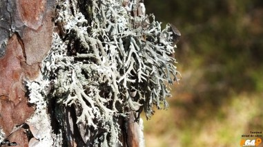 Licheni, simbioză perfectă