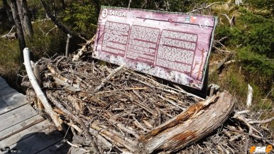 Lemnele uscate sunt importante pentru pădure