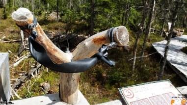 Praștie cu care putem contribui la înmulțirea coniferelor