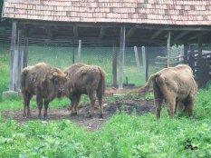 Rezervația de Zimbri Hateg-Slivuț
