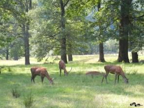 Parcul Vânători Neamț și zimbrăria