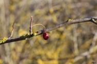 Fructe degerate și stafidite