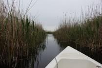 Canale în deltă
