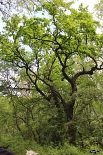 Crengi ciudate în Pădurea Letea